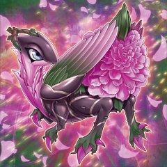 Roxrose Dragon