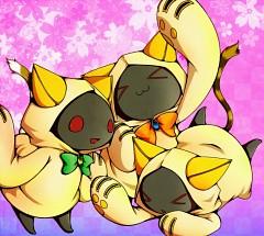 Kaka Kittens