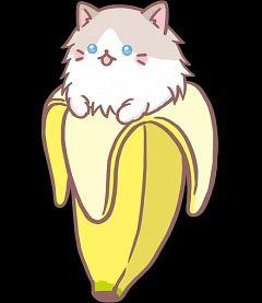 Ragdoll Bananya