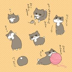 Japancat