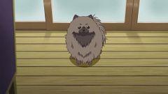 Tanuki(Dog)