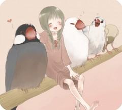 air-bird